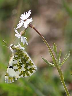 Eastern Washington Wildflowers