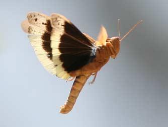 Washington Insect