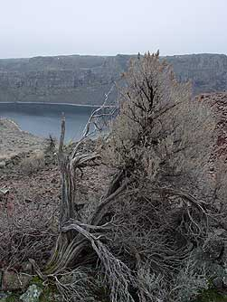 Big sagebrush overlooking Dusty Lake