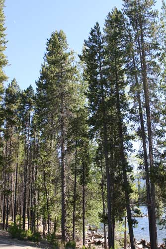 lodgepole men Read 10 reviews of lodgepole campground (nps campground)  lodgepole is a good campground for easy walking distance  men were using the sinks in the .